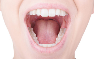 What Are The Functions Of The Different Types Of Teeth?